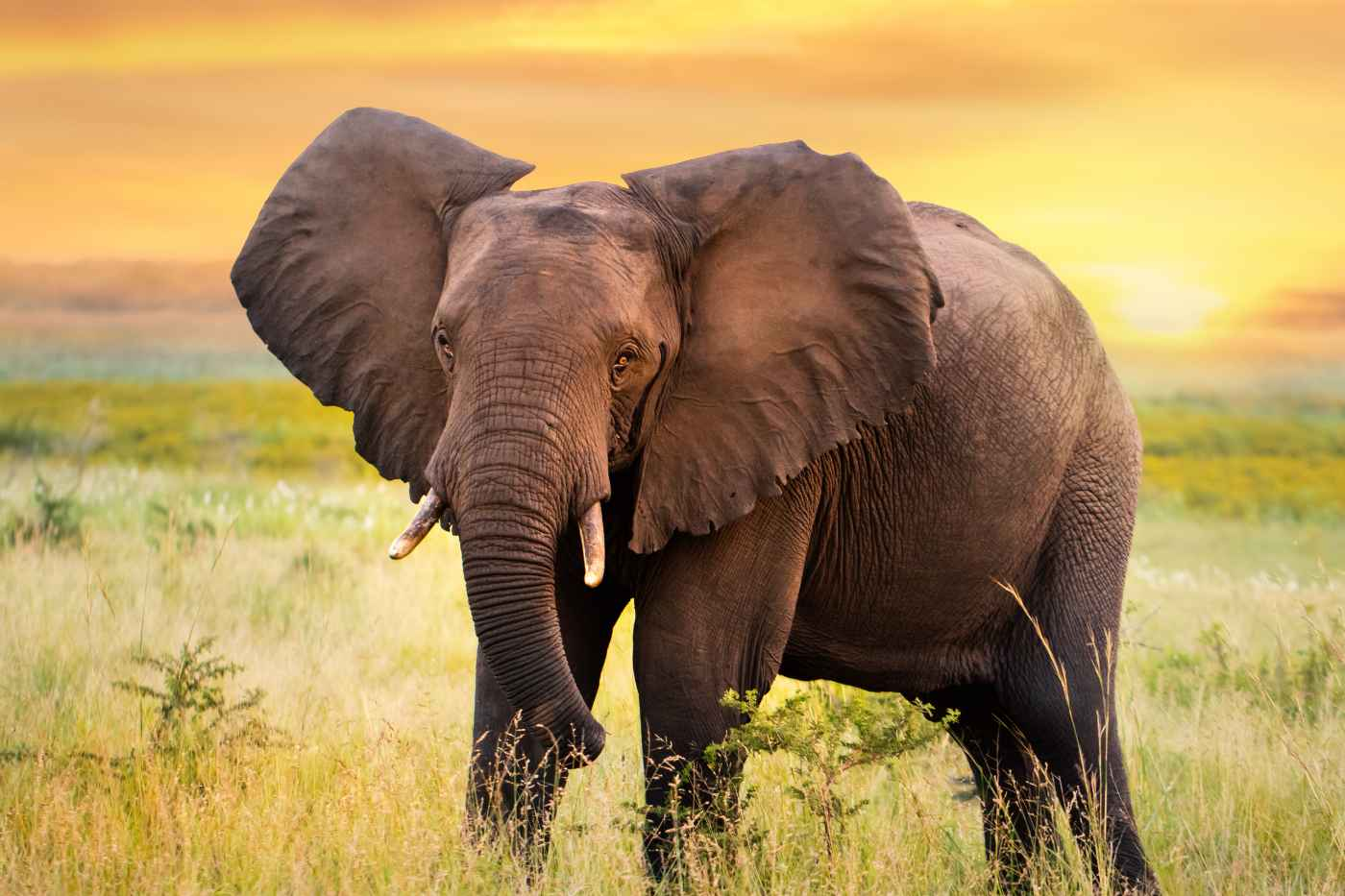 The Big Dark Elephant In The Room:  Dealing with Depression and Mental Illness